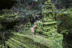 Balinese tempel Royalty-vrije Stock Foto