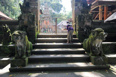 Balinese temple in Ubud Sacred Monkey Forest on Bali Royalty Free Stock Photography