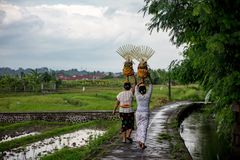 Balinese women carrying offerings on her head stock images