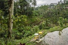 Balinesealtare på de Tegallalang risterrasserna och vegetationen, Ubud, Bali, Indonesien arkivfoton