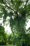 Balineseanlagen Lizenzfreie Stockbilder