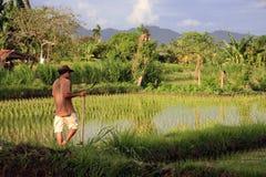 Balinesebonde med skäran Fotografering för Bildbyråer
