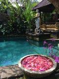 Balinesegarten und -pool in Ubud, Bali, Indonesien Stockfotos