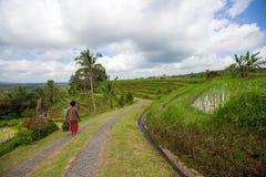 Balinesekvinnan promenerar risen terrasserar av Bali, Indonesien royaltyfria foton