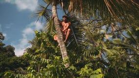 Balinesemann, der auf Palme klettert stock footage