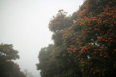 Baliness a fleuri l'arbre dans le brouillard Images libres de droits