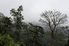 Baliness a fleuri l'arbre dans le brouillard Photo stock
