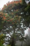 Baliness a fleuri l'arbre dans le brouillard Image stock