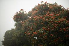 Baliness kwitnął drzewa w mgle Fotografia Royalty Free