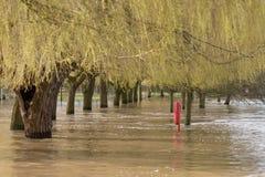 Balise de vie entourée par des eaux d'inondation sous des saules Photographie stock