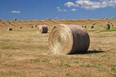 baljordbruksmarkhö Royaltyfri Foto