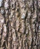 Balk. Bark focus for screen Stock Photography