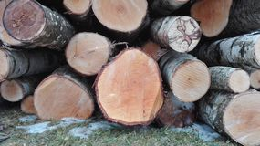 The balk. This is one of fuel types. Wood is very usefull to make electricity and warm houses royalty free stock photo