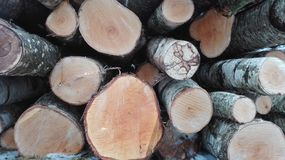 The balk. This is one of fuel types. Wood is very usefull to make electricity and warm houses royalty free stock image