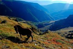 Balkan-Pferd Lizenzfreies Stockfoto