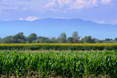 Balkans plantations fields view Stock Photos