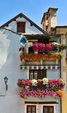 balkonów kwiaty Obrazy Stock