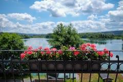 Balkon kwitnie z jeziorem w tle w Niedernberg Fotografia Royalty Free