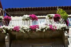 Balkon mit den weißen und rosa Blumen Sonniger Tag, blauer Himmel Pontevedra, alte Stadt, Galizien, Spanien stockfotografie