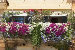 Balkon splatający z kwiatami petunie Zdjęcie Stock