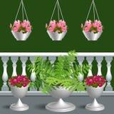 Balkong med pelargon och paparotnikom Royaltyfri Foto