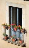Balkong mycket av röda rosor i Girona, Catalonia, Spanien Royaltyfria Bilder