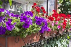 Balkongblommaaskar som fylls med blommor Royaltyfri Bild