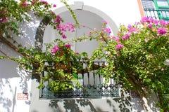 Balkongdekor Blommor växer lite varstans Arkivbild