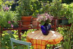balkongen blommar växter Royaltyfri Foto