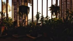 Balkongträdgård royaltyfria foton