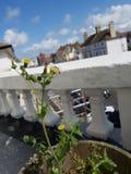 Balkoninstallatie Royalty-vrije Stock Afbeelding