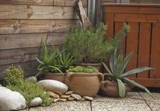 Balkonowa roślina Obraz Royalty Free