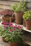 Balkonowa roślina Fotografia Royalty Free