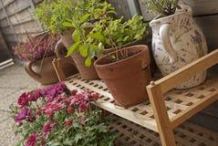 Balkonowa roślina Zdjęcie Stock