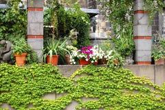 Balkonowy ful z kwiatem Zdjęcie Royalty Free