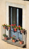 Balkonowy pełny czerwone róże w Girona, Catalonia, Hiszpania Obrazy Royalty Free