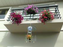 Balkonowy pitunia Fotografia Royalty Free