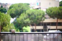 Balkonowy poręcz Obrazy Royalty Free