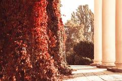 Balkonspalten hegen helles gelocktes Laub, sonniges Wetter der Herbstnaturschönheit ein lizenzfreies stockfoto