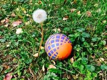 """Ball around a flower. Children's ball lies near a flower """"dandelion Stock Images"""