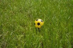 Ball auf einem Gras Stockbilder