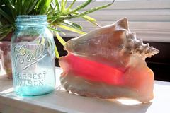 Ball blue glass jar and conch shell. Ball blue glass canning jar and conch shell are sitting on a table near a windowsill. and next to a flowered plant pot. An Stock Photo