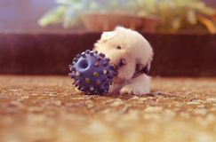 Ball, Blur, Colors Royalty Free Stock Images