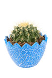 Ball cactus Royalty Free Stock Photography