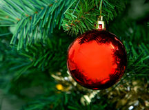 Ball on a Christmas tree Royalty Free Stock Photography