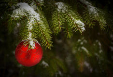 Ball on christmas tree Royalty Free Stock Images