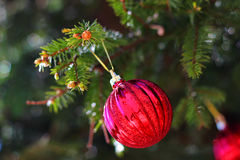 Ball on fir branch Royalty Free Stock Image