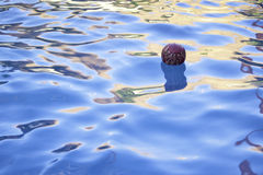 Ball floating in pool. Red flame ball floating in pool in summer time Royalty Free Stock Images