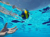 Ball floating in a pool Stock Photography
