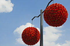 Ball-flower with beautiful blue background. Two red Ball-flower with blue and cloudy sky Stock Photography